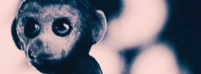 DeMentira releases his Chimpancé EP