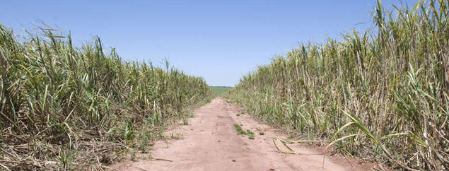 Death threat from Shell supplier on Guarani land