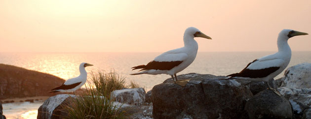 A sight to behold: Abrolhos Marine National Park